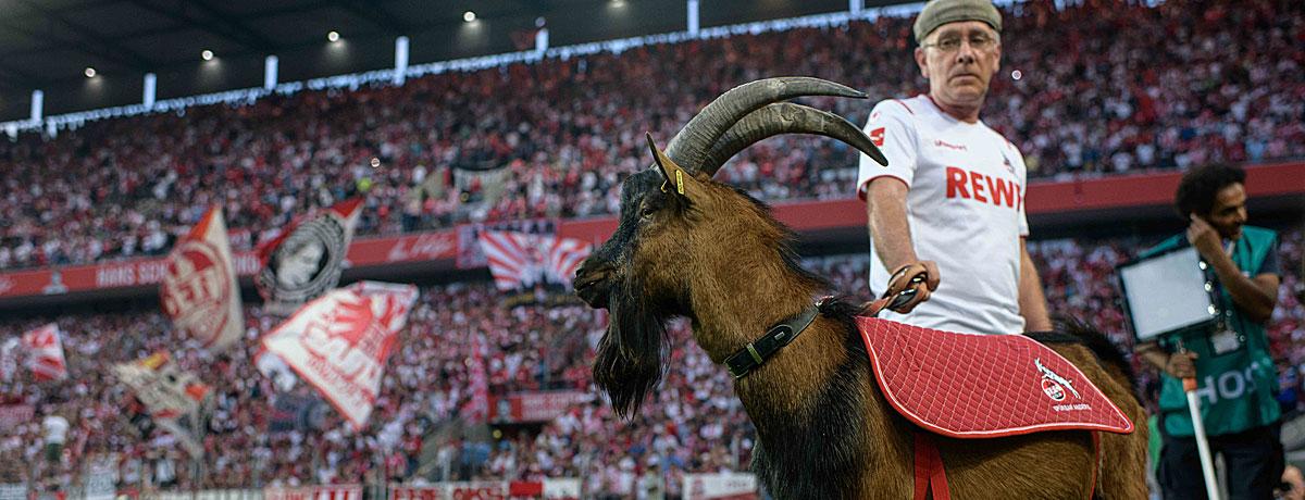 1. FC Köln - Hertha BSC Bundesliga 2021